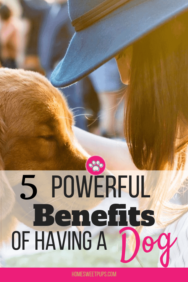 5 Powerful Benefits of having a dog These benefits are good for you
