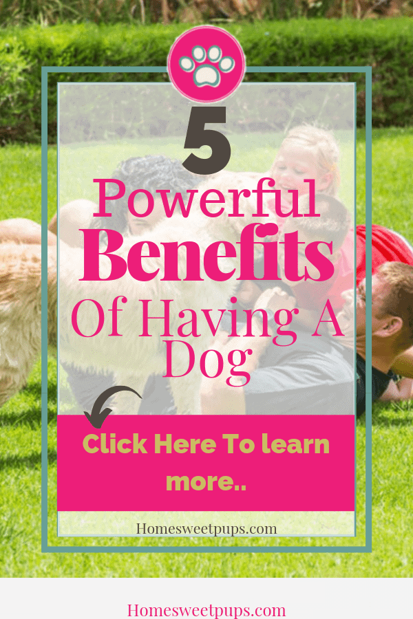 5 Powerful Benefits of having a dog These benefits are good for you and your family.