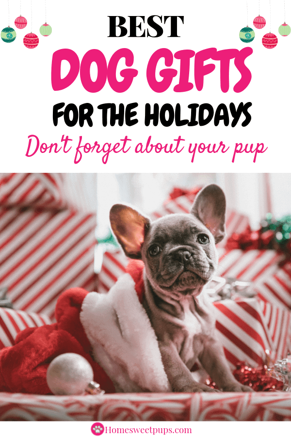 Best Dog Gifts for the holidays. Let's not forget this cute dog's presents this year