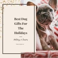 Best Dog Gifts Feature Image