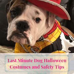 Last Minute Dog Halloween Costumes and Safety Tips