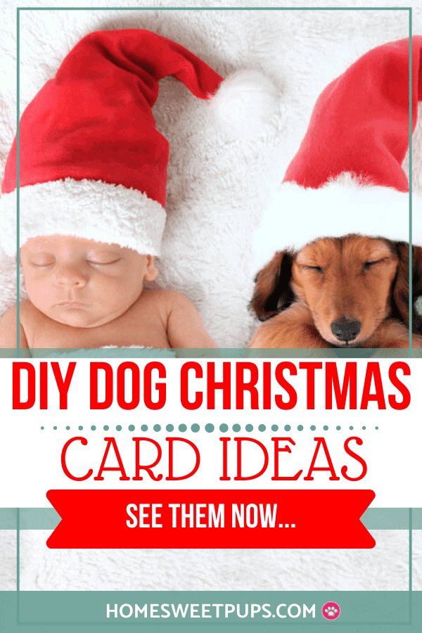 baby and dog wearing christmas for photoshoot