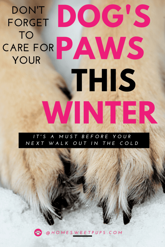 Don't forget to care for your dog's paws this winter.