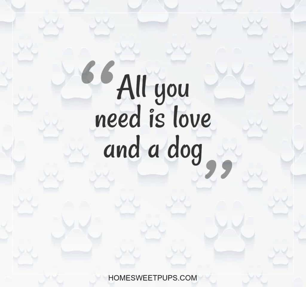 "Quote about Dogs Loyalty  ""all you need is love and a dog"""