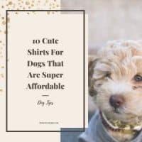 dog wearing cute t-shirt