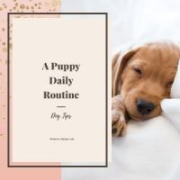 puppy and his daily routine