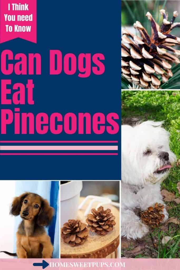 Dogs and Pinecones