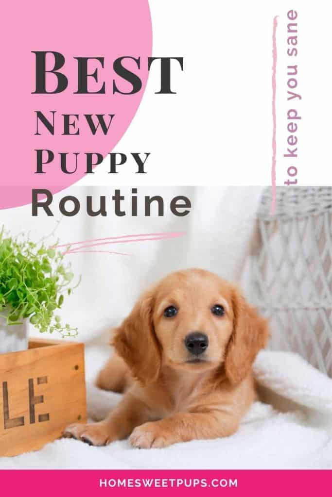 Cute puppy and why you need a routine
