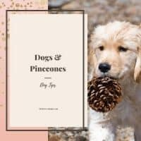 Dog holding pinecone in mouth