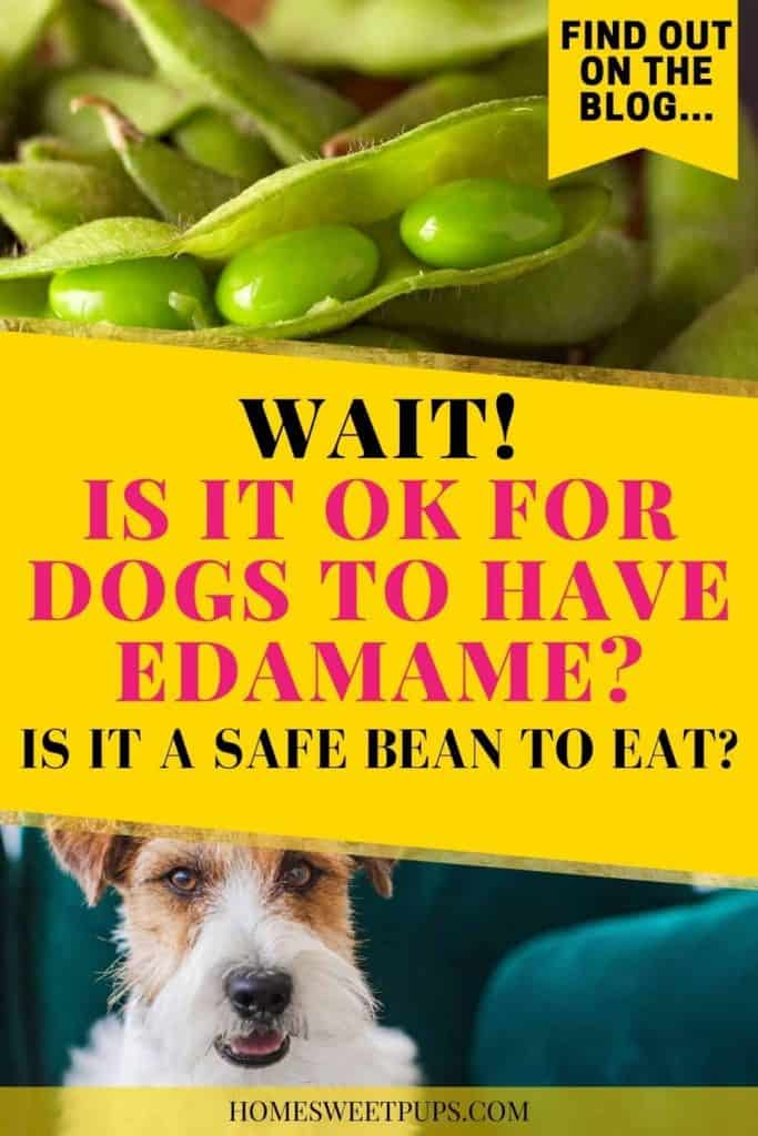 Is it ok for dogs to have edamame?