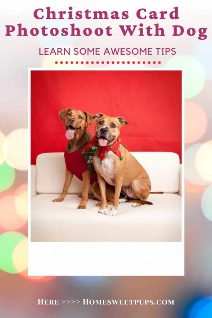 Diy Dog Christmas Card Ideas Home Sweet Pups