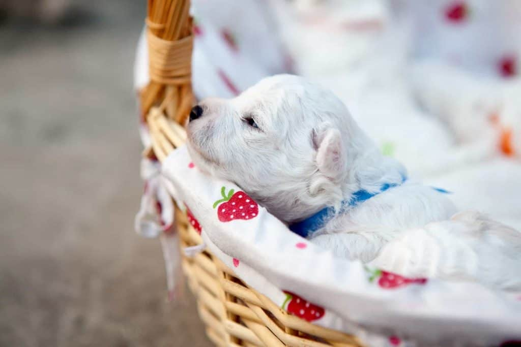 puppy in basket going about his daily routine